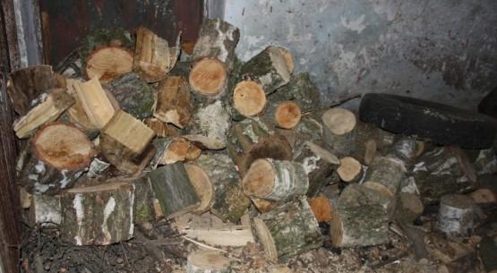 Skradzione drzewa, Busko-Zdrój (1)