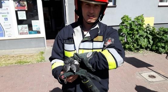 Strażacy uratowali gołębia (2)
