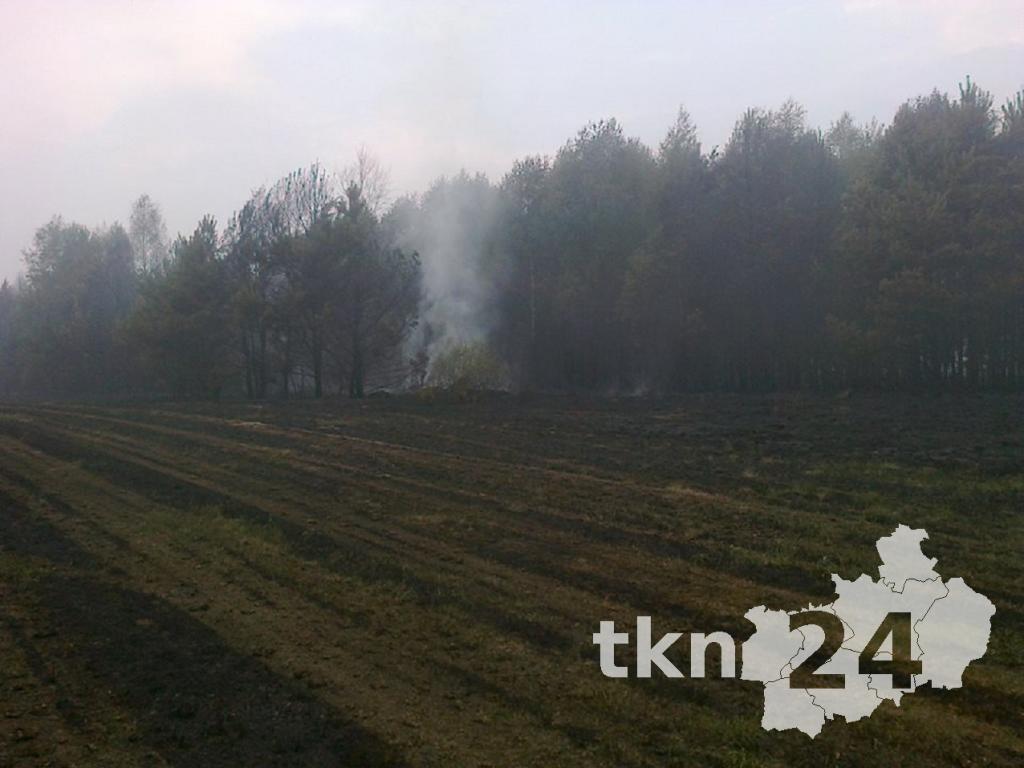 Ogień wdzierał się już na większe drzewa